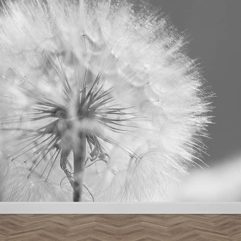 Fotobehang Dandelion in close up