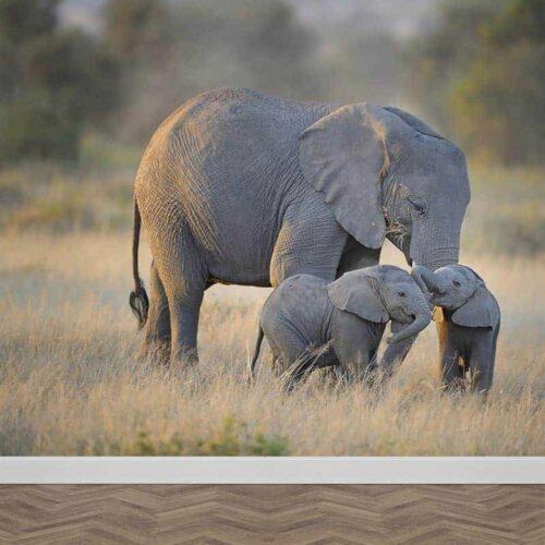 Fotobehang Olifanten familie