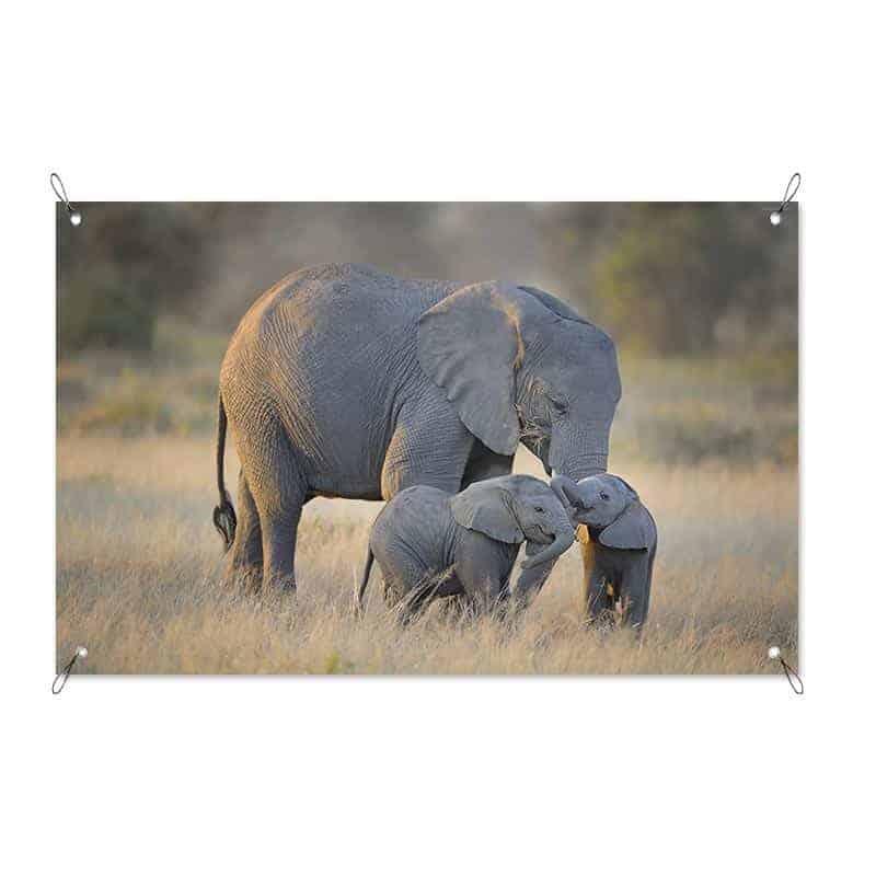 Tuinposter Olifanten familie