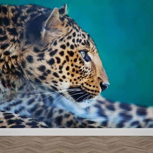 Fotobehang Nieuwsgierig luipaard