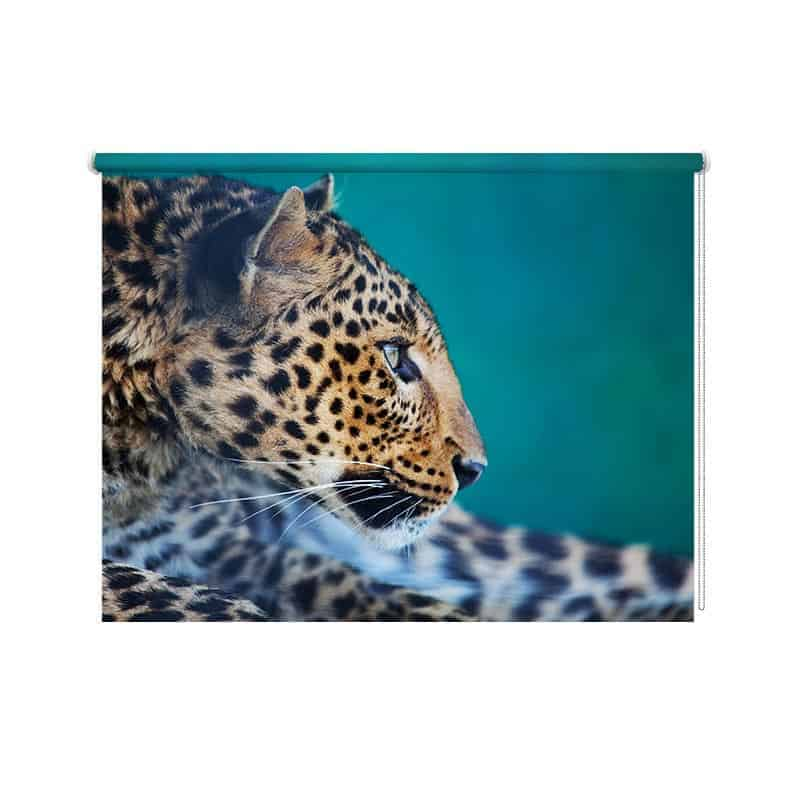 Rolgordijn Nieuwsgierig luipaard