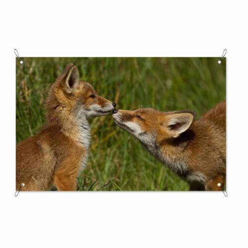 Tuinposter spelende vosjes