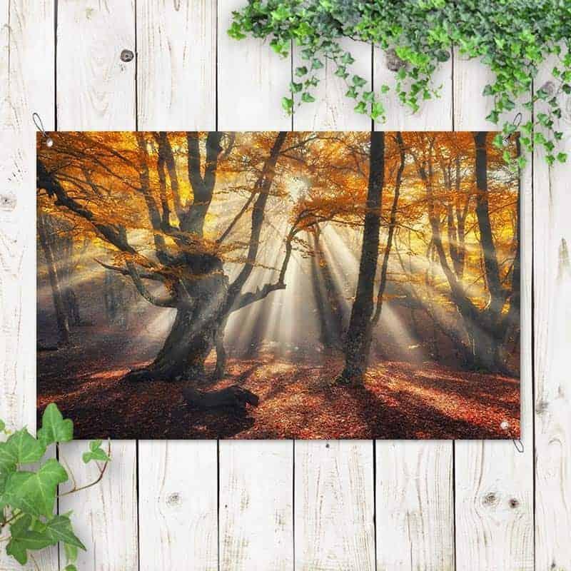 Tuinposter Zon in het herfstbos