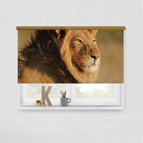 Rolgordijn Luie leeuw