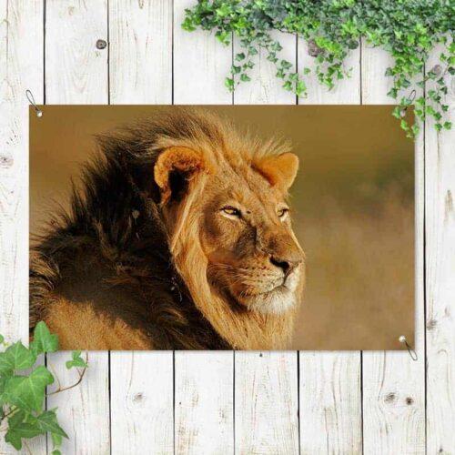 Tuinposter Luie leeuw