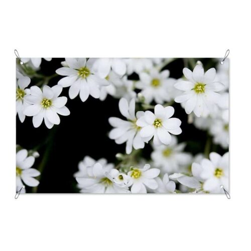 tuinposter Witte bloemen