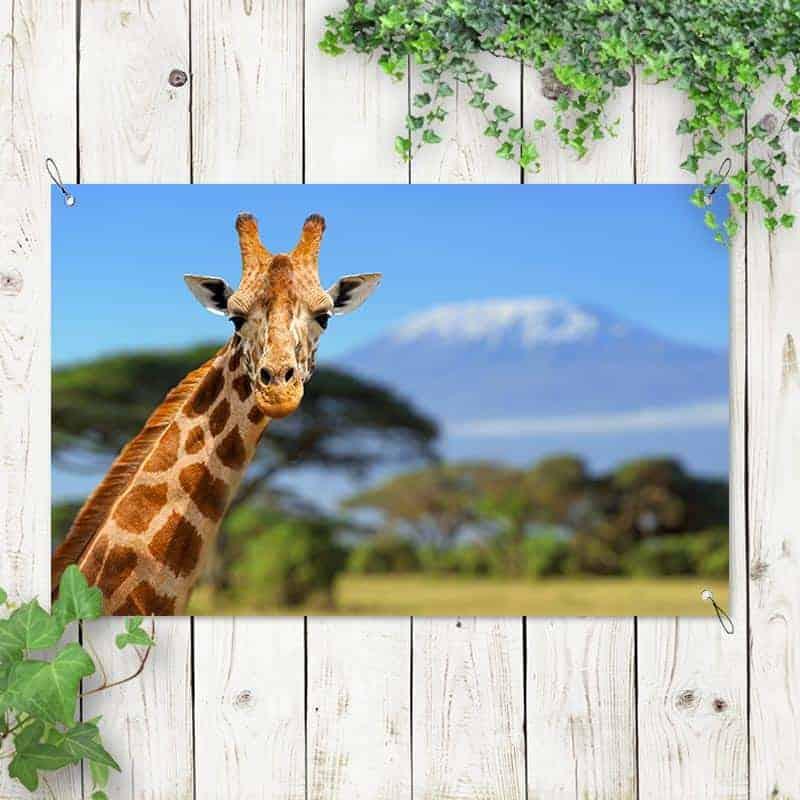 Tuinposter Giraffe voor Kilimanjaro