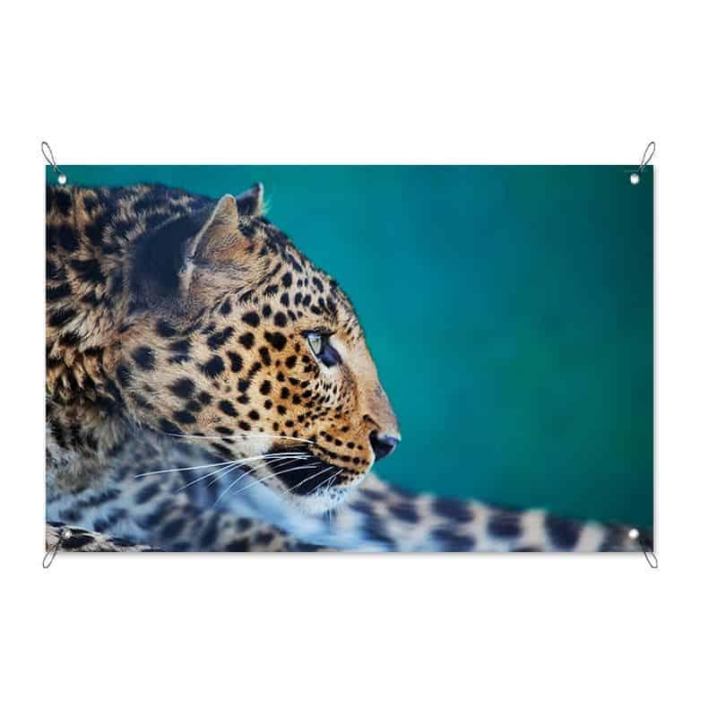 Tuinposter Nieuwsgierig luipaard