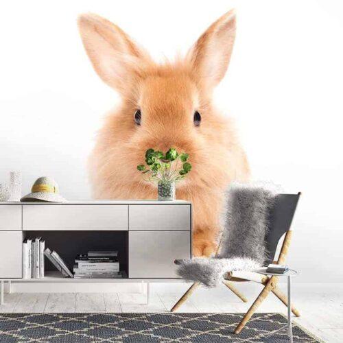 Fotobehang Lief konijntje
