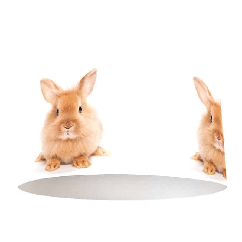 Lampenkap lief konijntje