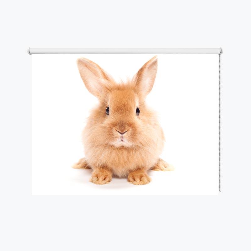 Rolgordijn Lief konijntje
