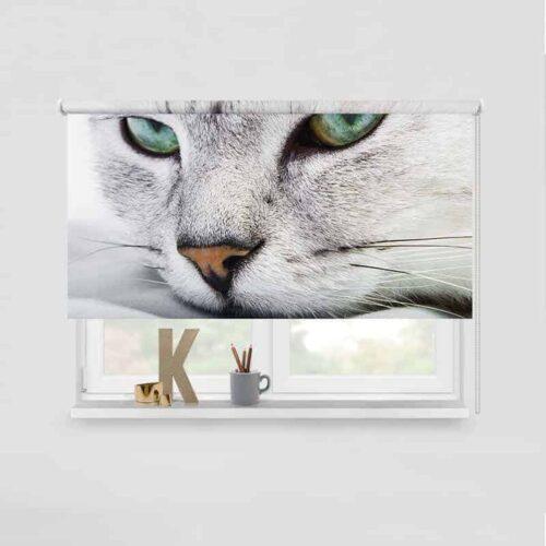 Rolgordijn luie kitten
