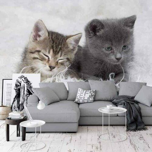 Fotobehang 2 schattige kittens