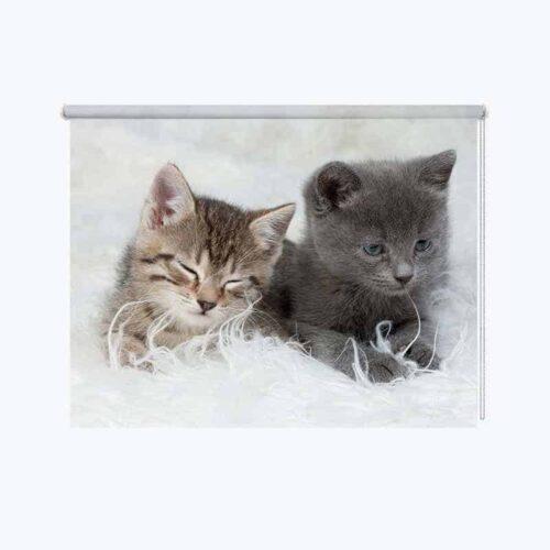 Rolgordijn 2 schattige kittens
