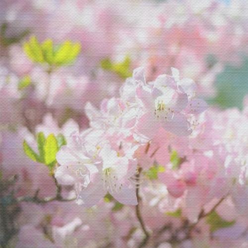 Tafelkleed Prunus bloesems