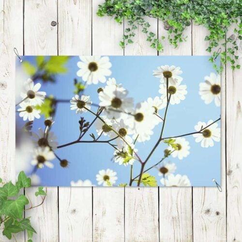 Tuinposter witte bloemen 2