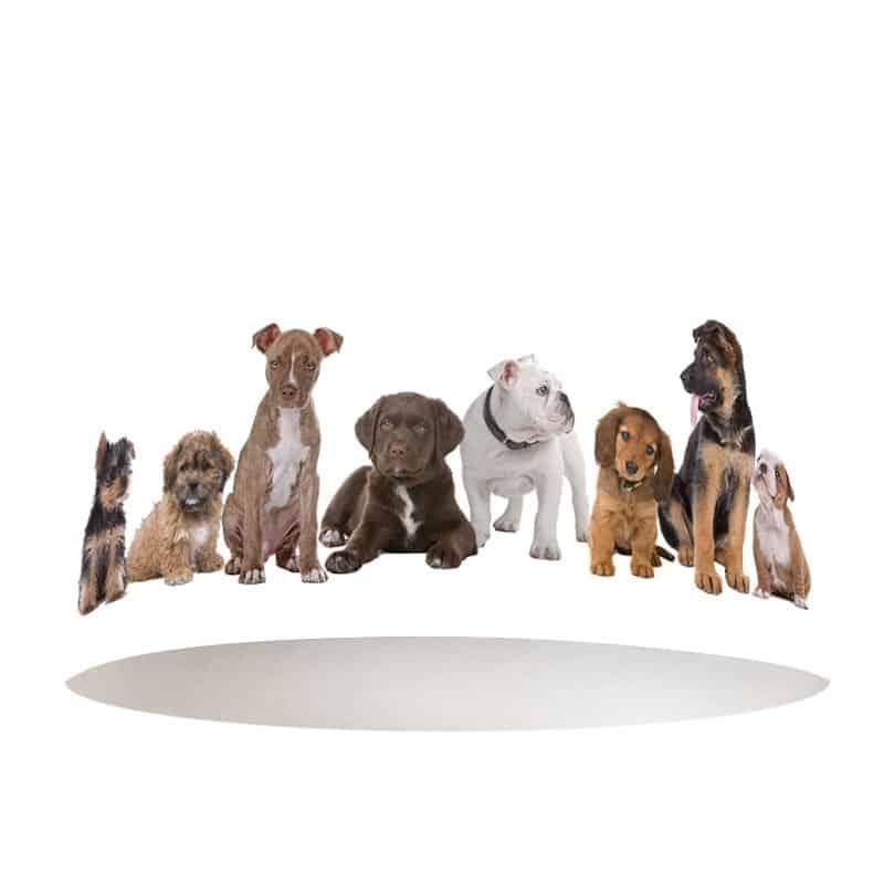 Lampenkap Hondjes op een rij