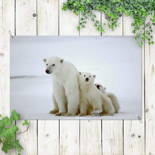 Tuinposter IJsbeer met jongen