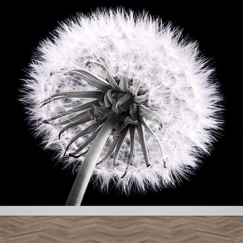 Fotobehang Dandelion in zwart wit