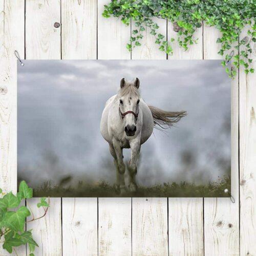 Tuinposter Wit paard