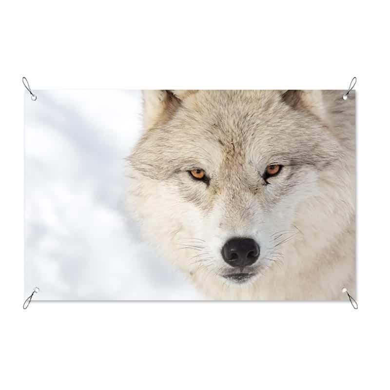 Tuinposter Wolf close up
