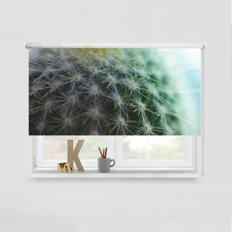 Rolgordijn Cactus close-up