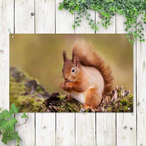 Tuinposter Nieuwsgierig eekhoorntje