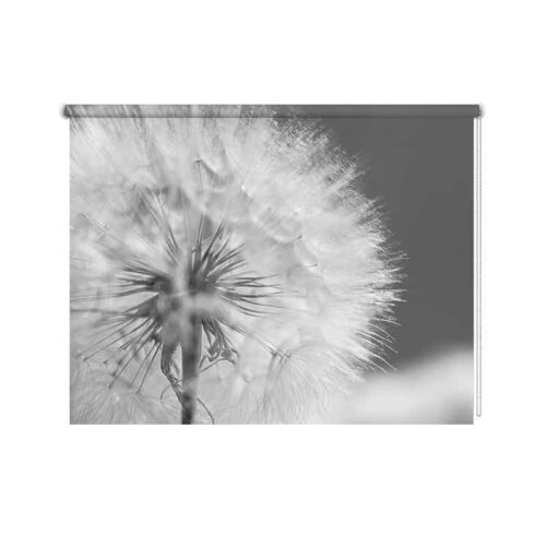 Rolgordijn Dandelion in close up