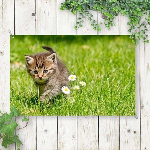 Tuinposter Kitten op onderzoek