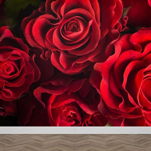 Fotobehang Rode rozen