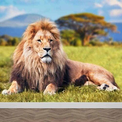 Fotobehang Relaxende leeuw