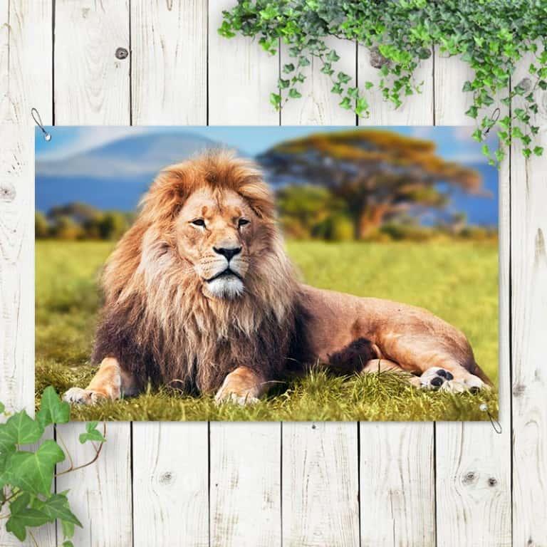 Tuinposter Relaxende leeuw