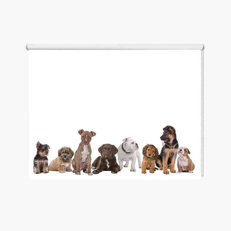 Rolgordijn Hondjes op een rij