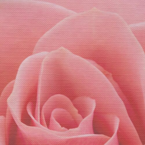 Tafelkleed Roos close-up