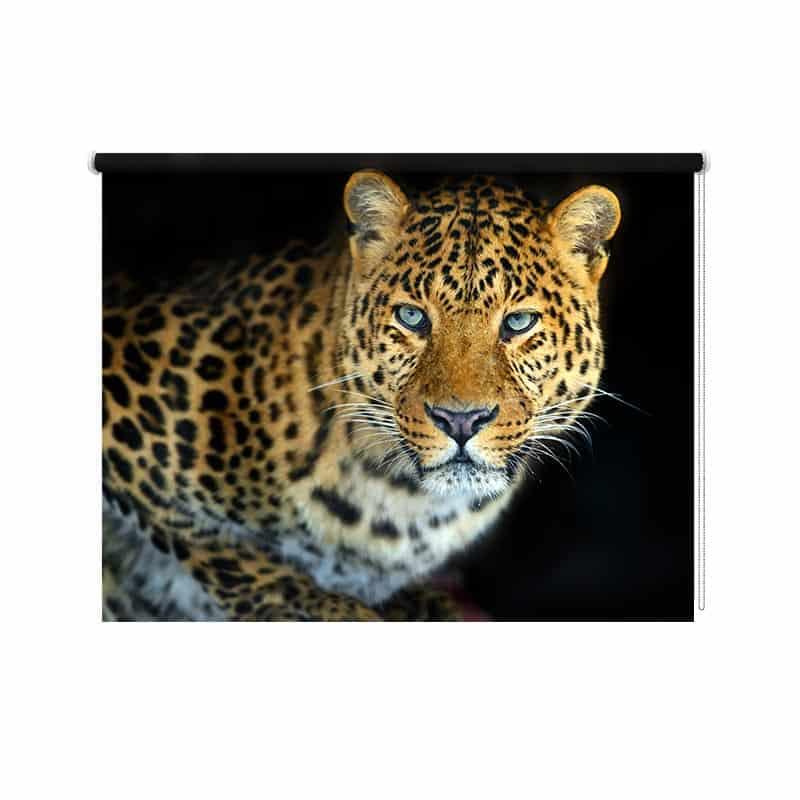 Rolgordijn Jaguar