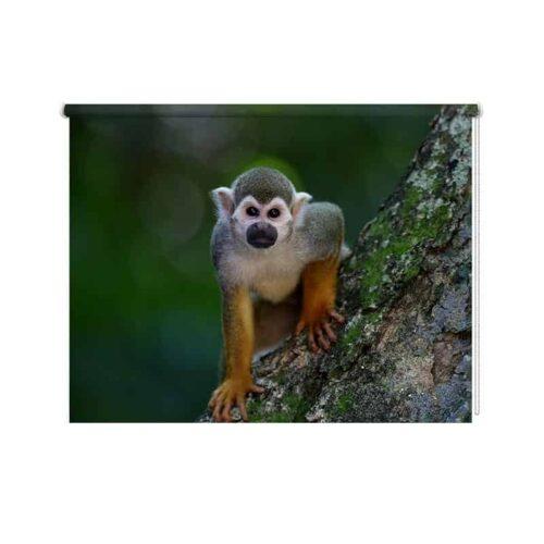 Rolgordijn Klein aapje