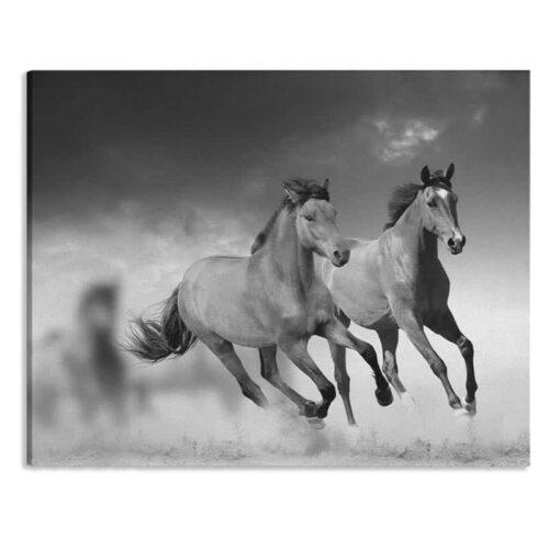 Canvas Paarden zwartwit