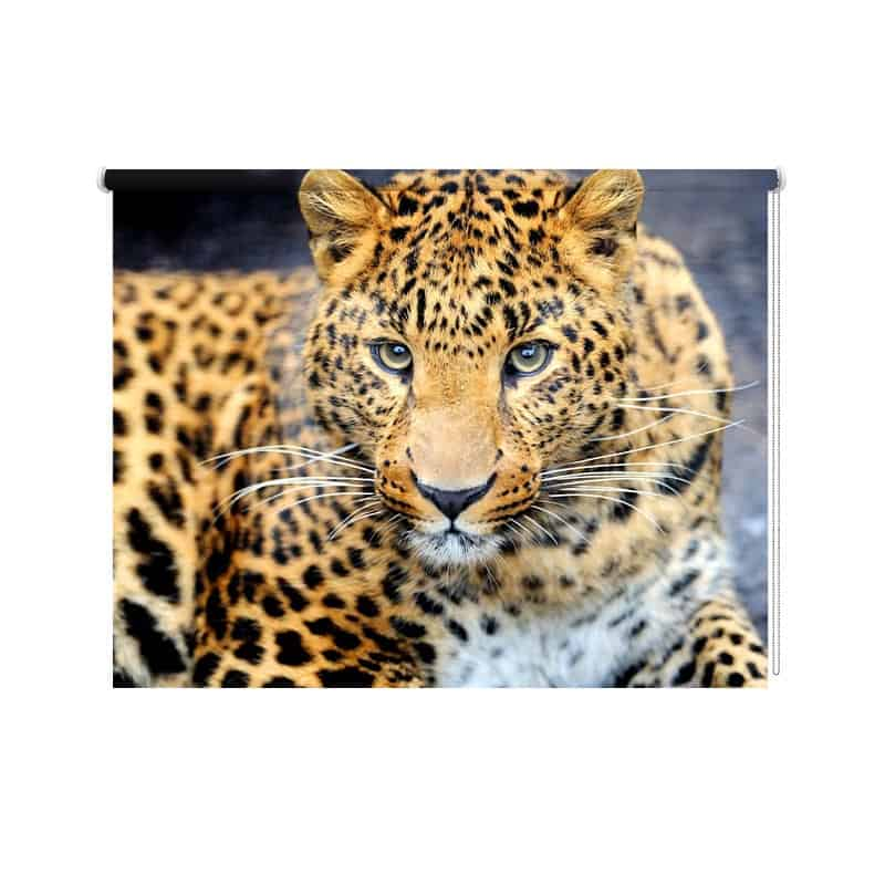 Rolgordijn luipaard close up