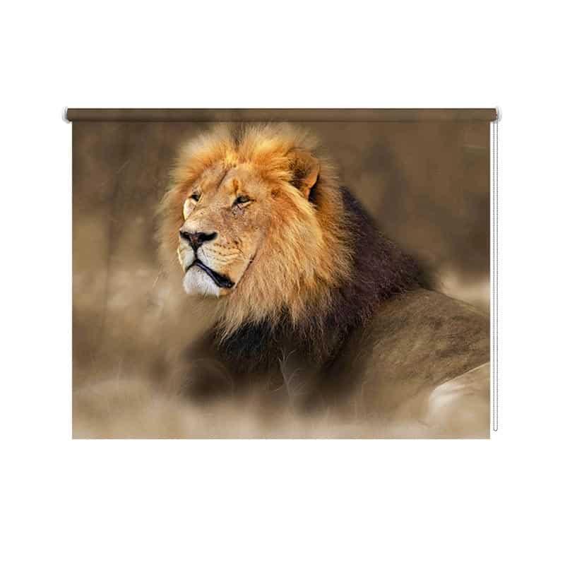 Rolgordijn oplettende leeuw