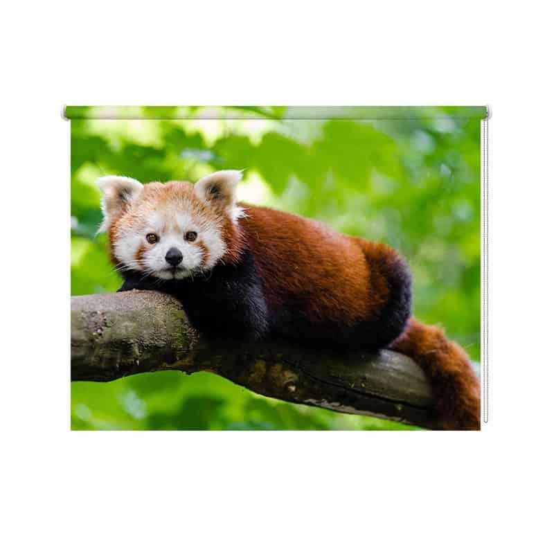 Rolgordijn rode panda close up
