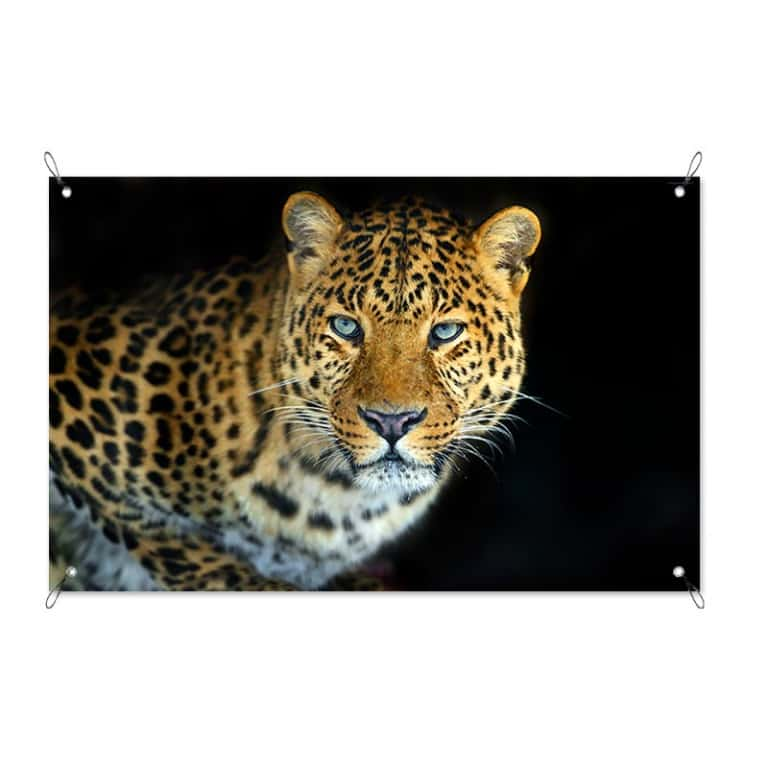 Tuinposter Jaguar