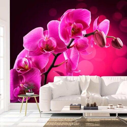 Fotobehang Orchidee close up