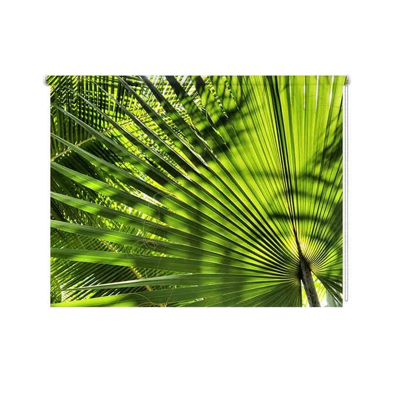 Rolgordijn Palmbladeren close up