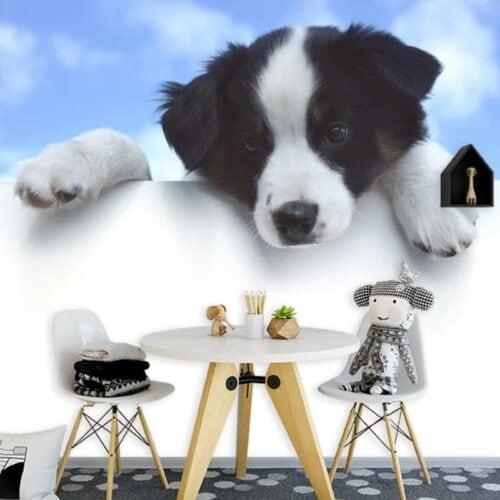 Fotobehang Puppy