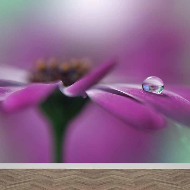 Fotobehang Paarse bloem en druppel