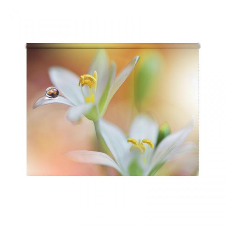Rolgordijn witte lelie met waterdruppel