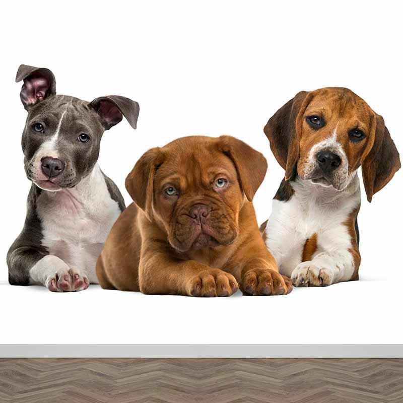 Fotobehang 3 puppy's op een rij