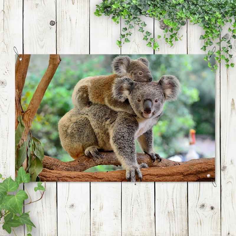 Tuinposter Koala met jong