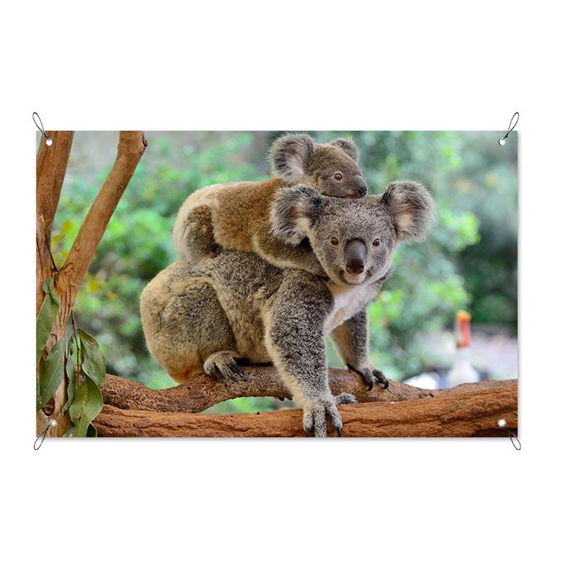 Admirable Tuinposter Koala Met Jong Ibusinesslaw Wood Chair Design Ideas Ibusinesslaworg