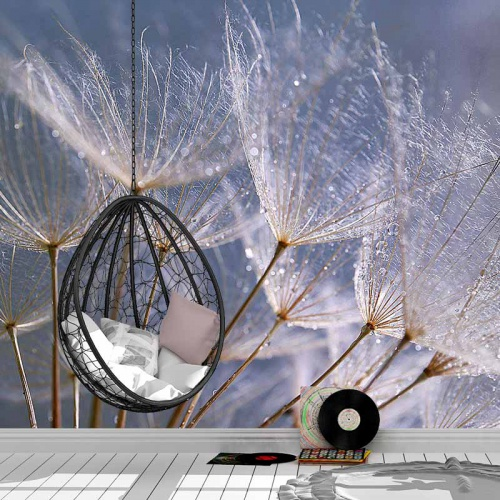 Fotobehang Dandelion grijs blauw